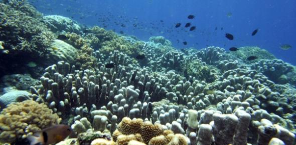How deep is the average ocean floor?