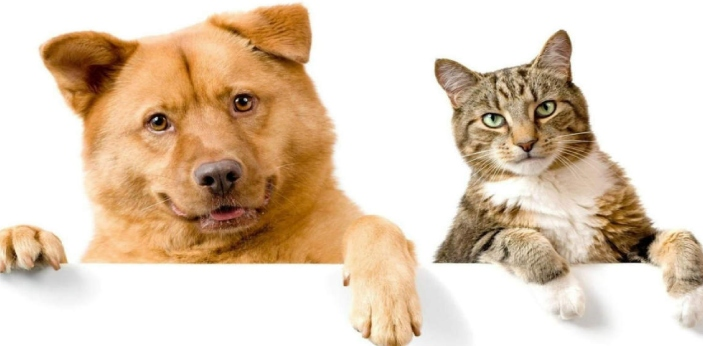 The major differences between dogs and cats can be well explained by comparing their character, and