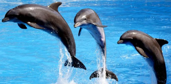 Which option will best fit in the sentence below?  <br/>Dolphins form extremely complicated allegiances and _______ continually change.