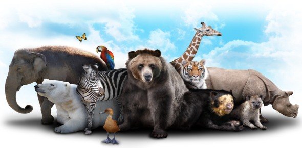 Which animal is the cleverest?