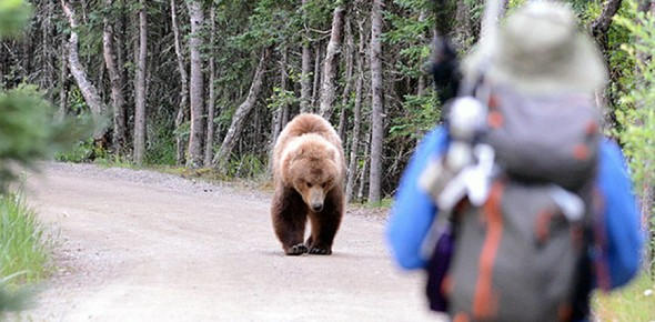 How dangerous are bears to humans?