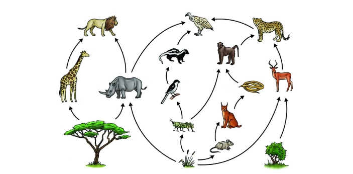 Carnivores and herbivores are different classifications of animals based on bodily features,