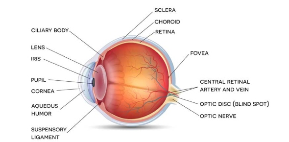 What is true about Corneal farinata?