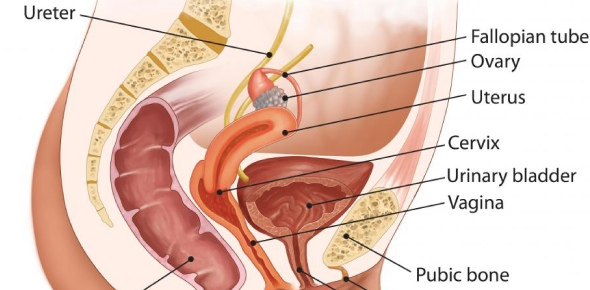 What is the most inferior extent of the peritoneal cavity in the female?