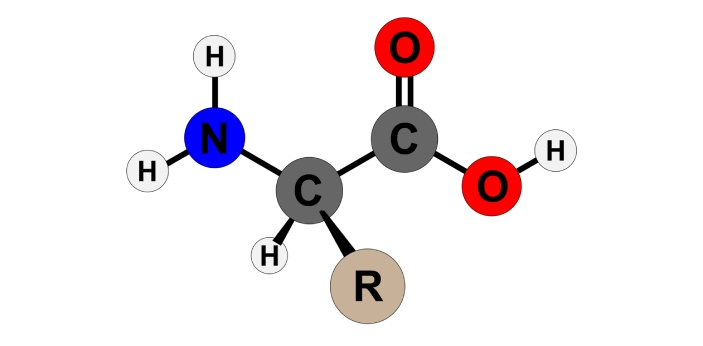 R group.R group determines the unique properties of each amino acid. All amino acids have an amino