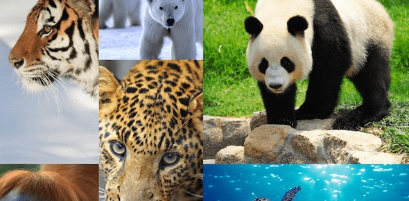 Which organizations are working towards preservation of endangered animals?