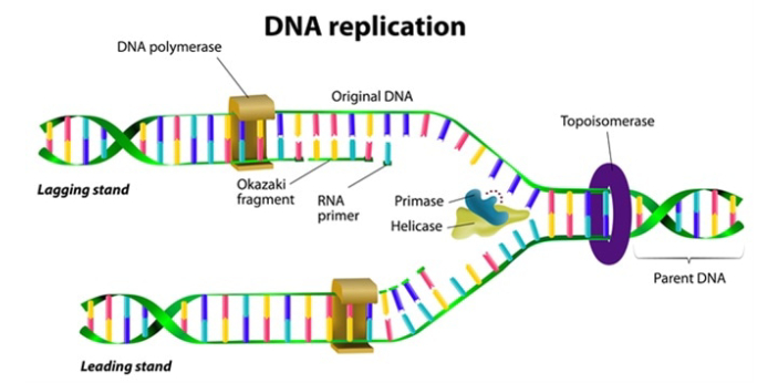 For some people, they feel that all types of DNA are just the same. People should take note of the