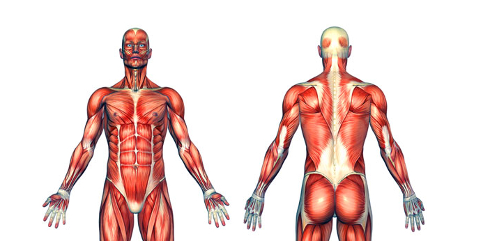 Muscles are built by lifting weights or working out on a regular basis. If you want to continue to