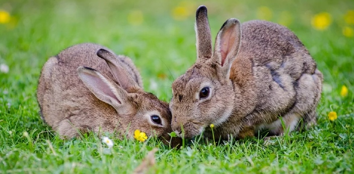 Rabbits and bunnies are actually the same things. Rabbits seem to be informally referred to as