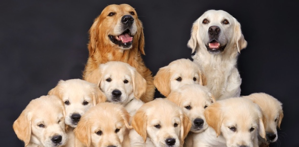 Do dogs recognize their parents and siblings?