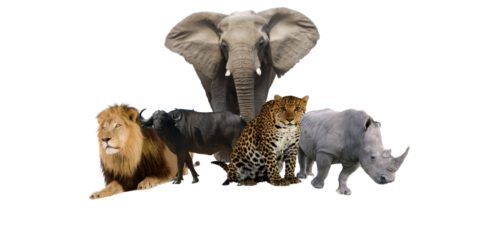 The correct answer is Tanzania. Tanzania has the most lions in the world. Research shows that there