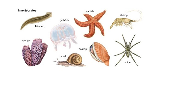 All invertebrates have four standout traits. They do not possess cell walls, like other animals,