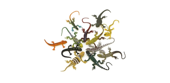 The Lizard is a reptile. Lizards are a widespread group of squamate reptiles, with over 6,000