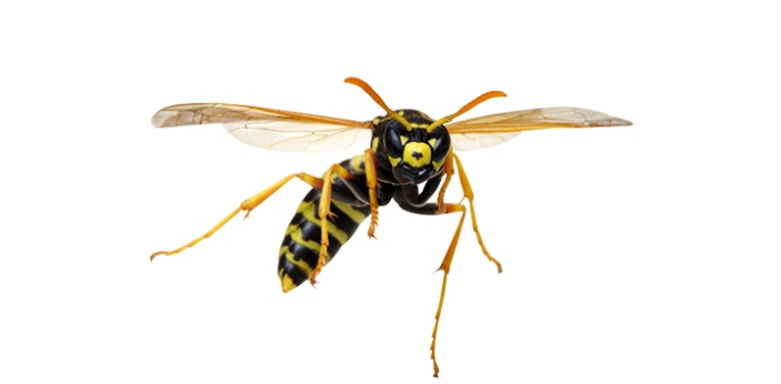 Many people do not know the difference between a wasp and hornet. This is because they look alike