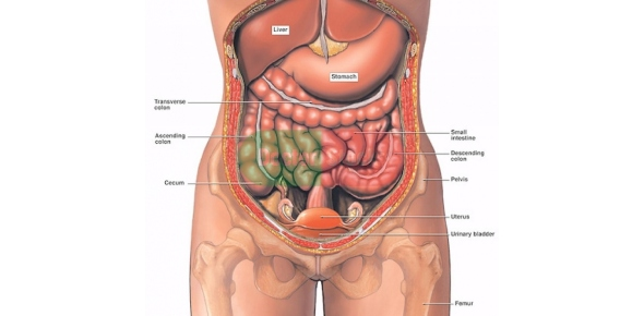 Is the liver the largest internal organ in the body?