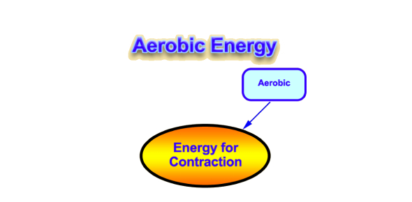 What fitness component matches the aerobic energy system?