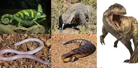 Are lizards from the same family as dinosaurs?