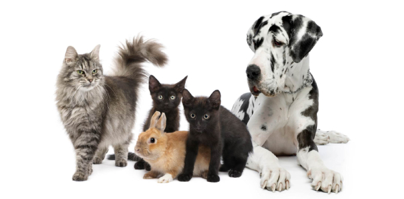 There are far more benefits to owning a pet than one can state. First, pets bring a lot of joy to
