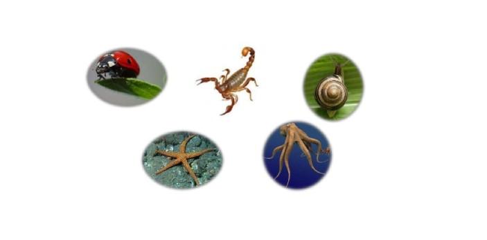 No, invertebrates are not rare. In fact, over 95% of all animal species are invertebrates. They are