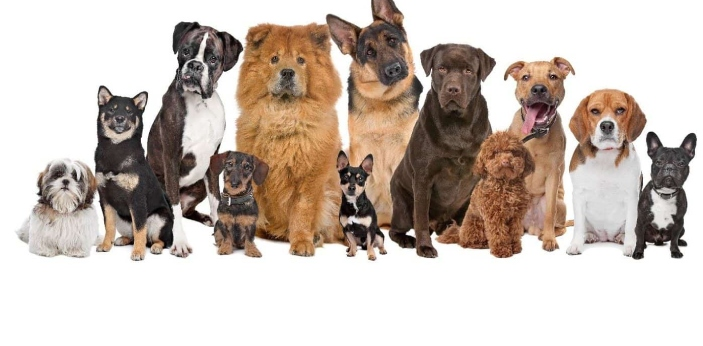Dogs have been considered to be man's best friend for many centuries. There are hundreds of