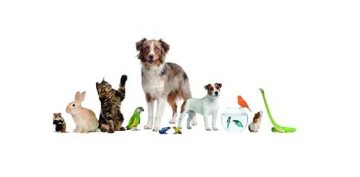 Some people may assume that pets and domestic are the same but actually, they are not the same.