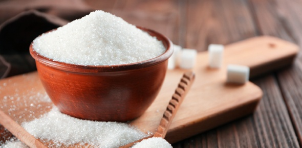 Who were the first ones in recorded history to cultivate Sugar?