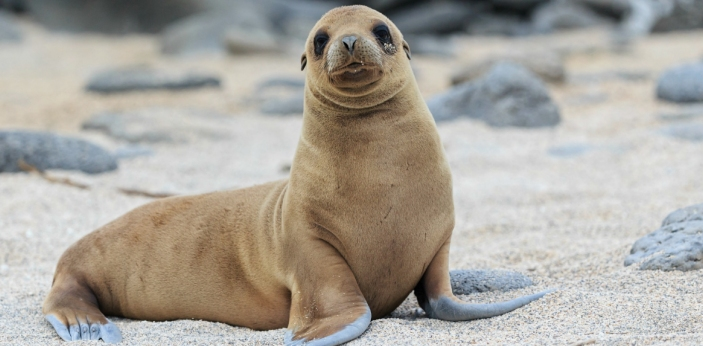 One of the biggest misconceptions is people assume that seals and sea lions are the same. Sea lions