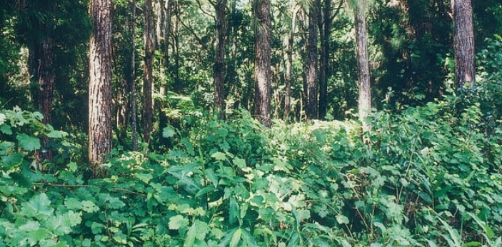 There are several ways in which our lands are being degraded, such as the destruction of global