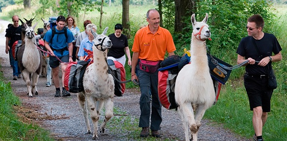 Which countries should you visit for alpaca rides?