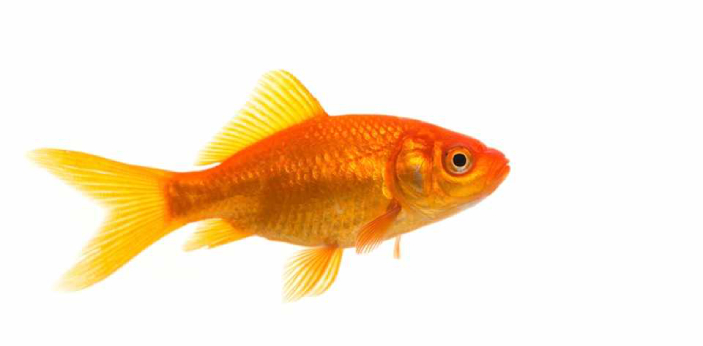 A fish is an example of an aquatic animal; this simply means a type of animal that lives in the