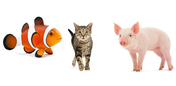 Which of the following animal is not a mammal?