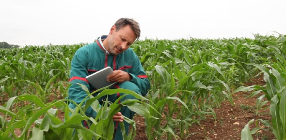 Which are the top universities to study agricultural engineering?