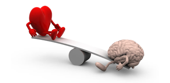Which is more superior, human brain or heart?