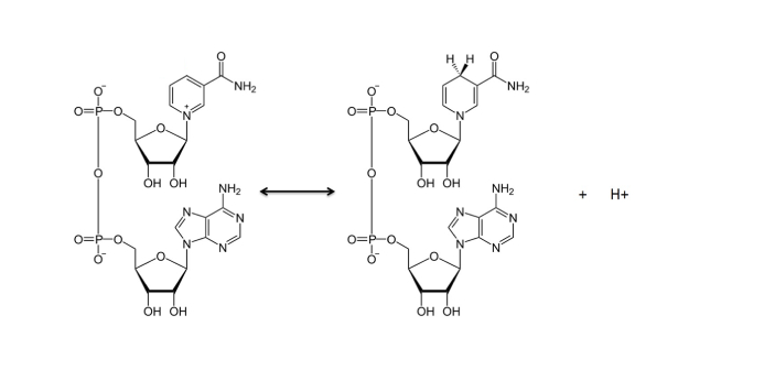 You may not be aware of what NAD and FAD are. There are both known to be electron carriers, and