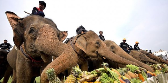 Why don't elephants eat meat?