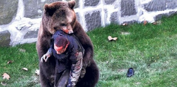When does a bear attack a human?