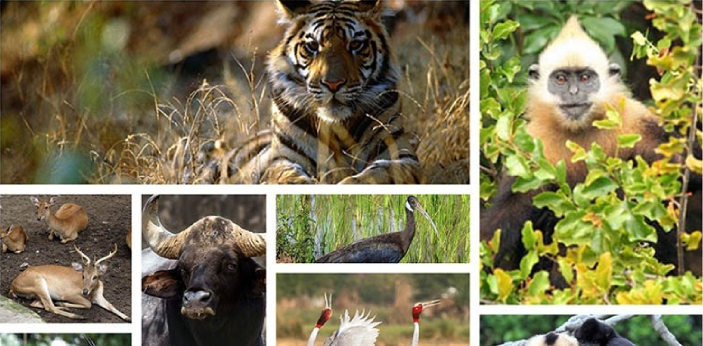 Threatened and endangered species both refer to the type of animals that are in danger of reaching