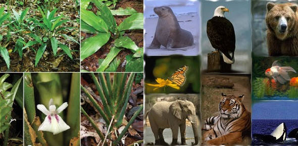 Which discipline is better: Botany or Zoology?