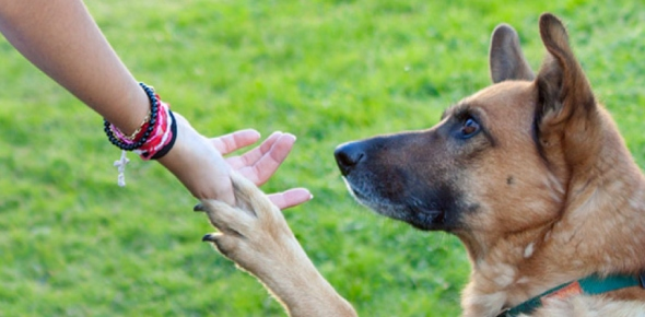 How do dogs communicate with their owners?