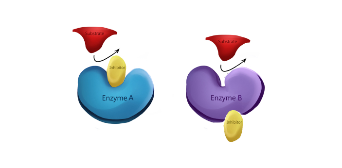 Irreversible Enzyme Inhibitors and Reversible Enzyme Inhibitors are two types of enzymes