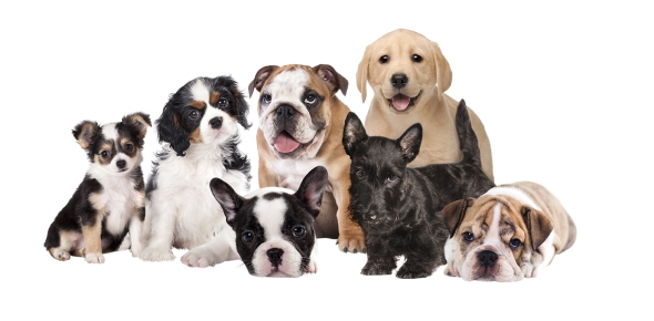 Which dog breed is the cutest?