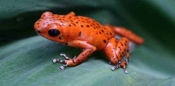 What roles do amphibians play in our ecosystem?