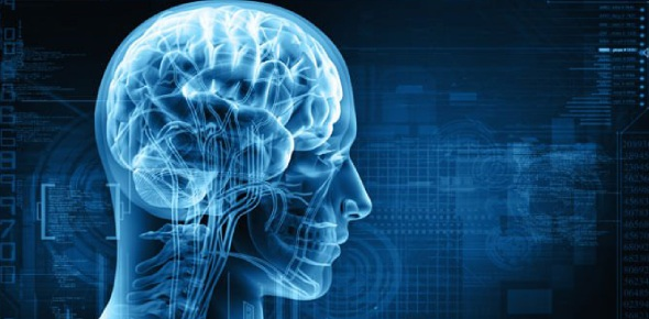 What factors affect human intelligence?