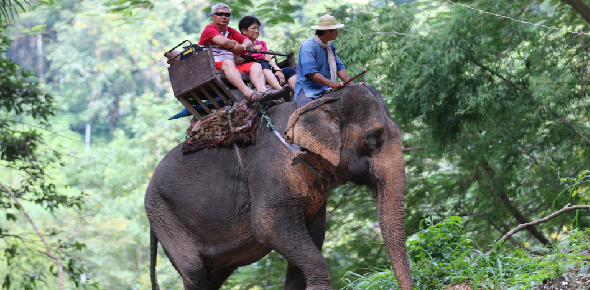 Is elephant riding ethical?