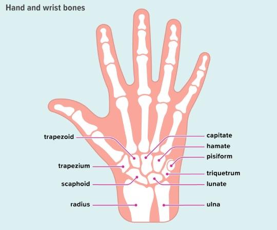 Carpal Bones Sliding Puzzle